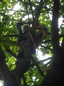 Dieter schreckte auch vor dem höchsten Baum nicht zurück!